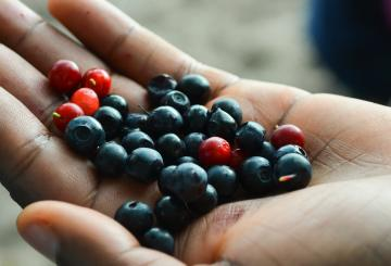 A hand holding Finnish forest berries